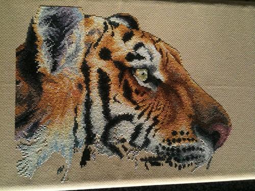 Regal Tiger - 17 Sept 2011