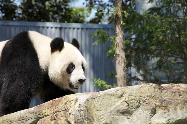 Panda21
