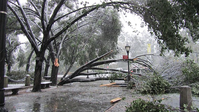 snowtober. downed tree.