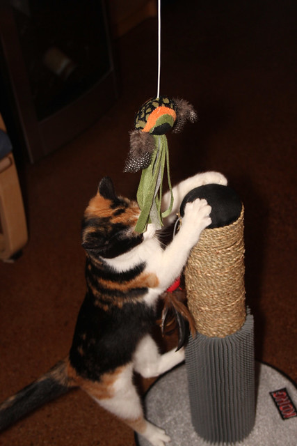 kitties love their scratching post