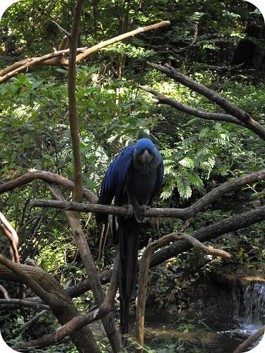 Nashville Zoo 4