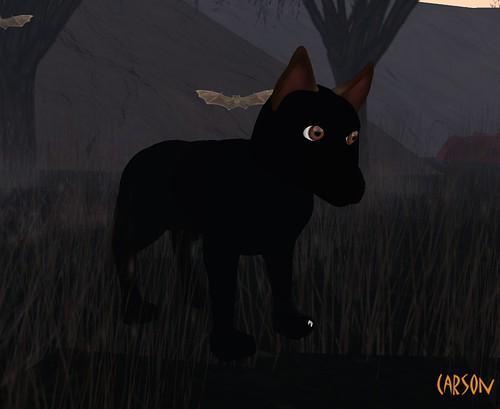 PuzzleMint- Wolf Avatar