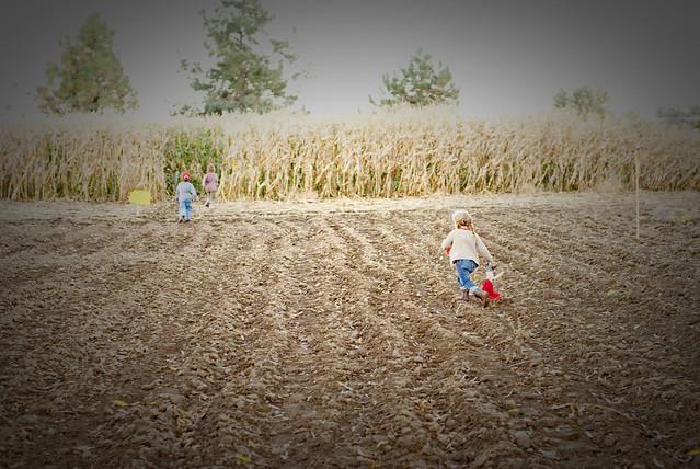 Harvest-52