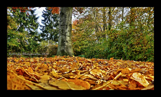 #305/365 Ocean of leaves...