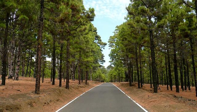El Hierro: Pinar