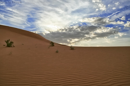 The Desert by TARIQ-M