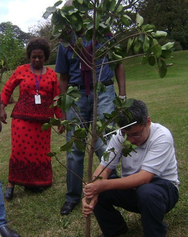 ILRI plants trees to honour the life of Kenyan environmentalist