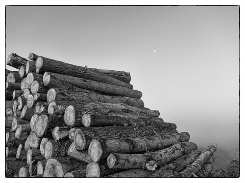 Logs in the Mis, Tophill Low