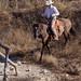 Paso Robles Horse Ranch 7