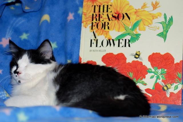 flowerbook 10-23-2011 1-47-27 PM