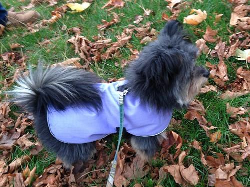 new purple coat