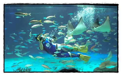 scuba feeding