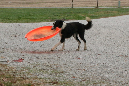 Dillon and His Sled