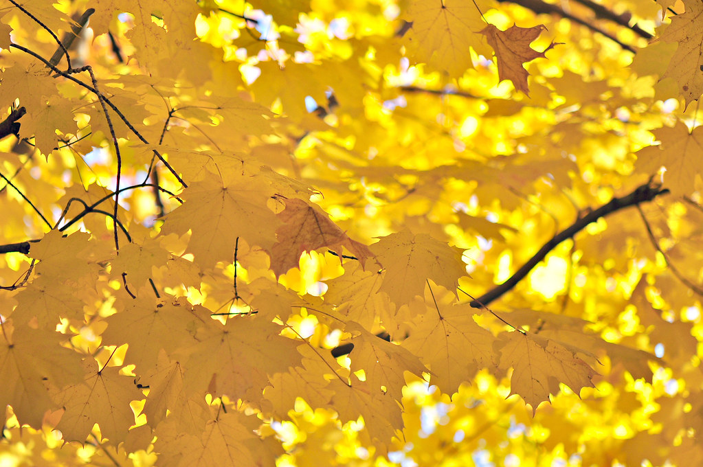 """""""How wonderful yellow is. It stands for the sun."""" --Vincent Van Gogh"""