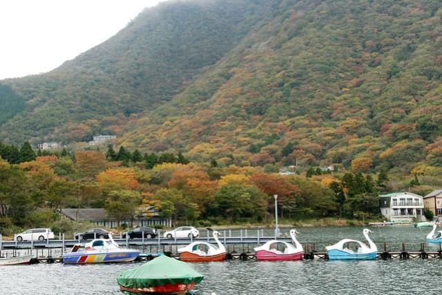 雖然紅葉情報裡還沒提到箱根,但山頭上還是有部份已經變黃發紅的樹葉