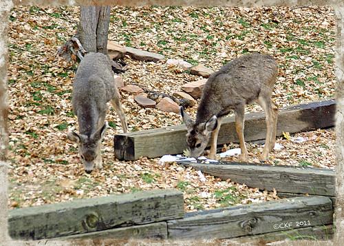 Bambi Breakfast