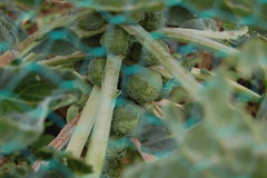 2011 10 16_allotment_0003