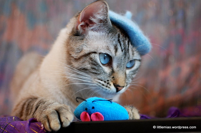 bluechoo 11-3-2011 10-51-55 AM