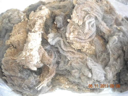 Wool 2009