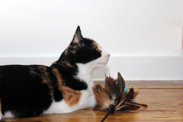 Fun with a feather toy