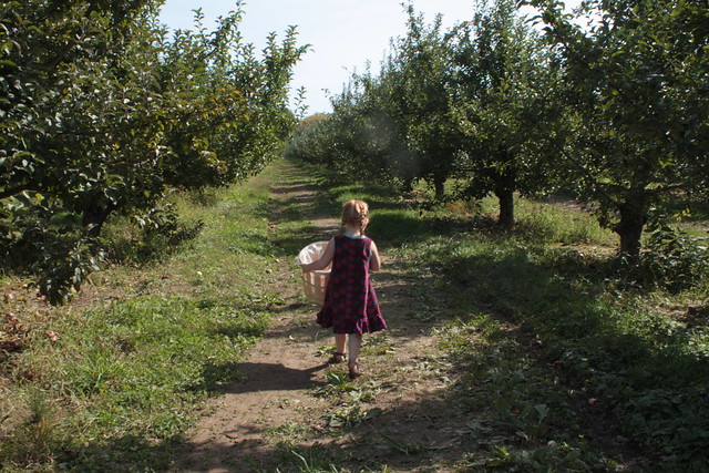 Half Pint Goes Apple Picking