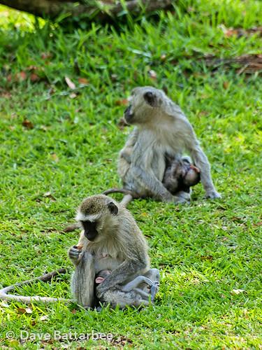 Monkey Creche