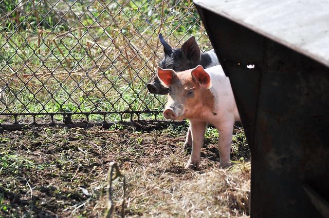 farmgirl-0117.jpg