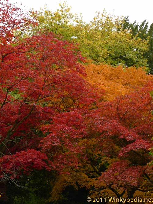 Autumn gold and red