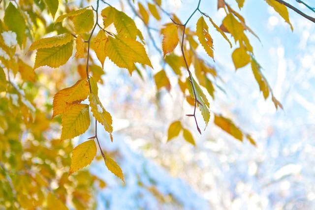 Fall leaves amid the beautiful winter bokeh.