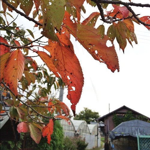 秋ですなぁ~♪ #autumn #iphonography #instagram #iphone4s