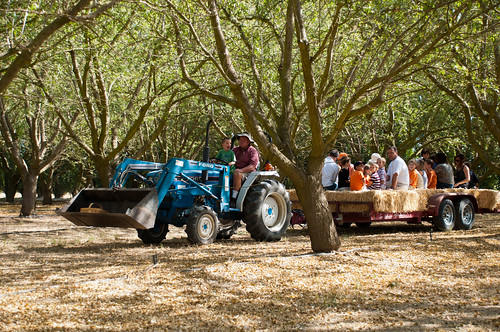 Hayride Through Almond Trees