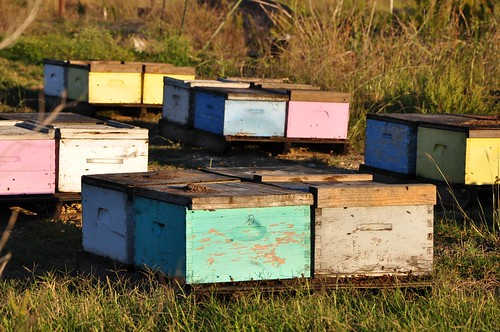 Colorful hives at sunset