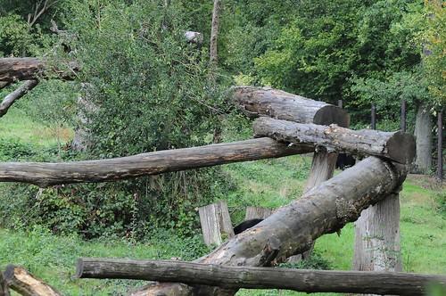 Brillenbärenanlage im Tierpark CERZA bei Lisieux in der Normandie