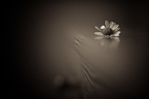 Flower b/w