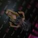 Misty Kingma - IMG_0407