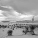 White Sands New Mexico-6.jpg