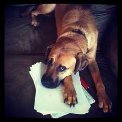 Grading dog is grading