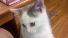 Kitty by spirit97