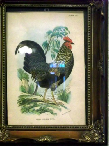 in color rooster by hines house