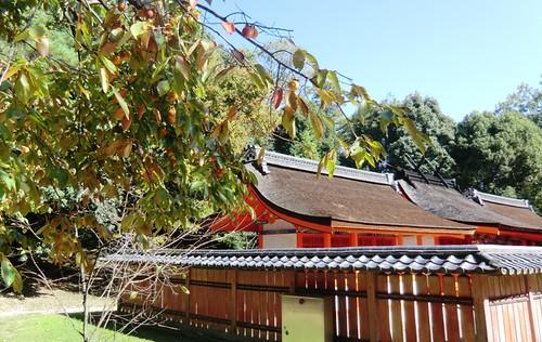 Persimmon Near Kusho Myoshin
