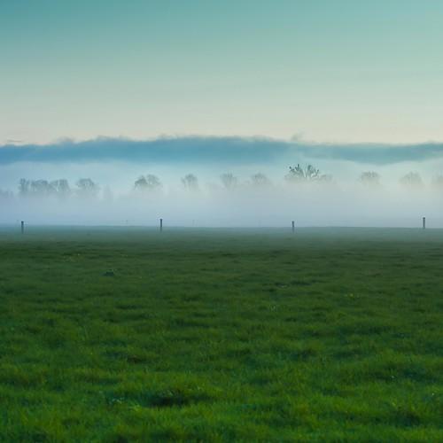 Farm Grass por â–ºCubaGallery