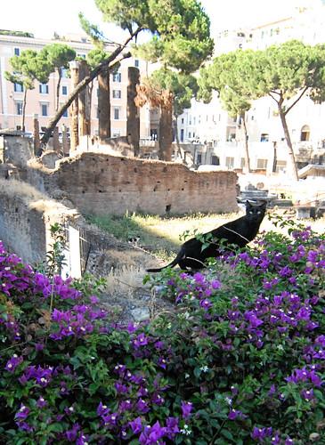 Rome cat sanctuary