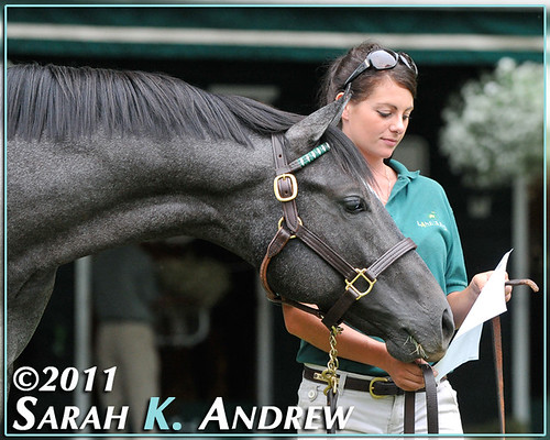 """Is that MY pedigree?"" Whippendeal (Unbridled's Song x Dream Supreme), Hip #111 at the Fasig-Tipton Saratoga Sale"