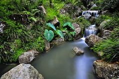 Serene scene in the tropical forest