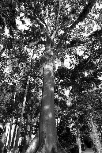 Suma Uma by LeicaPrayer