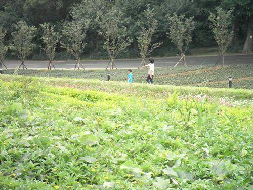大溪花海農場7