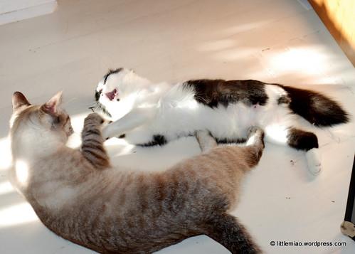 chunsprock 10-1-2011 3-59-09 PM