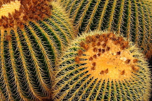 Chapter 9 - Lanzarote, Jardín de Cactus - (#6): Thorny gear