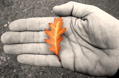 Autumn's Beauty in the Palm of My Hand