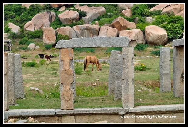 Hampi: Horses near Vittala Temple